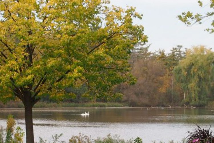 The Mill Pond in Richmond Hill